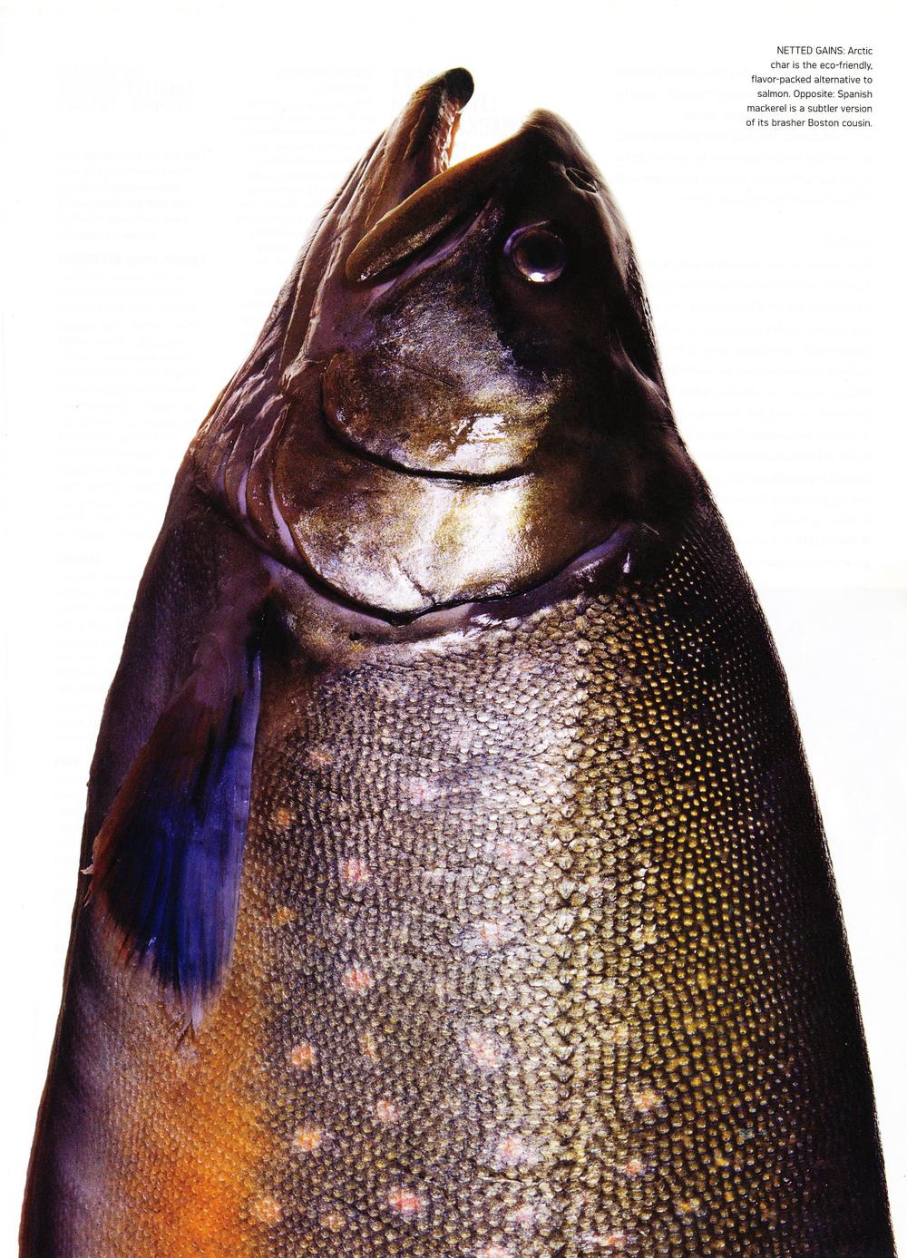13CGFish7.jpg