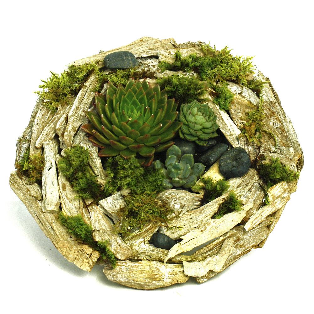 Succulent Landscape $50-$100 -
