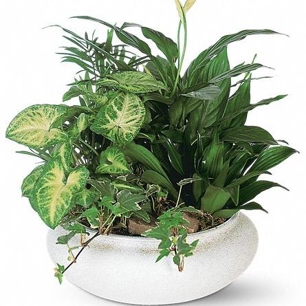 Dish Garden $50 -