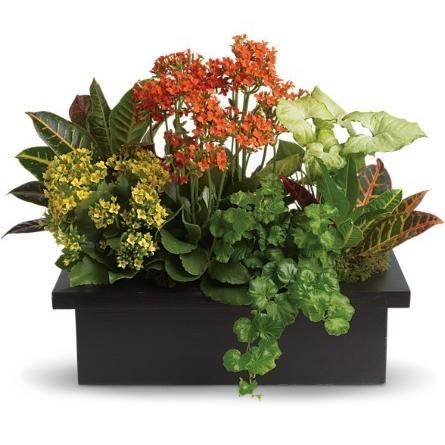 Stylish Plant Assortment $65 -