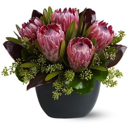 Positively Protea $80-$110 -