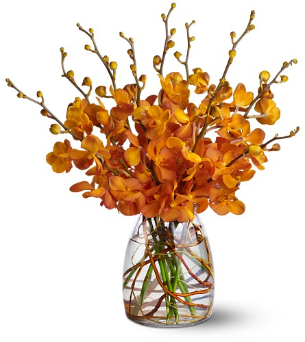 Orchid Embers $90-$135 -