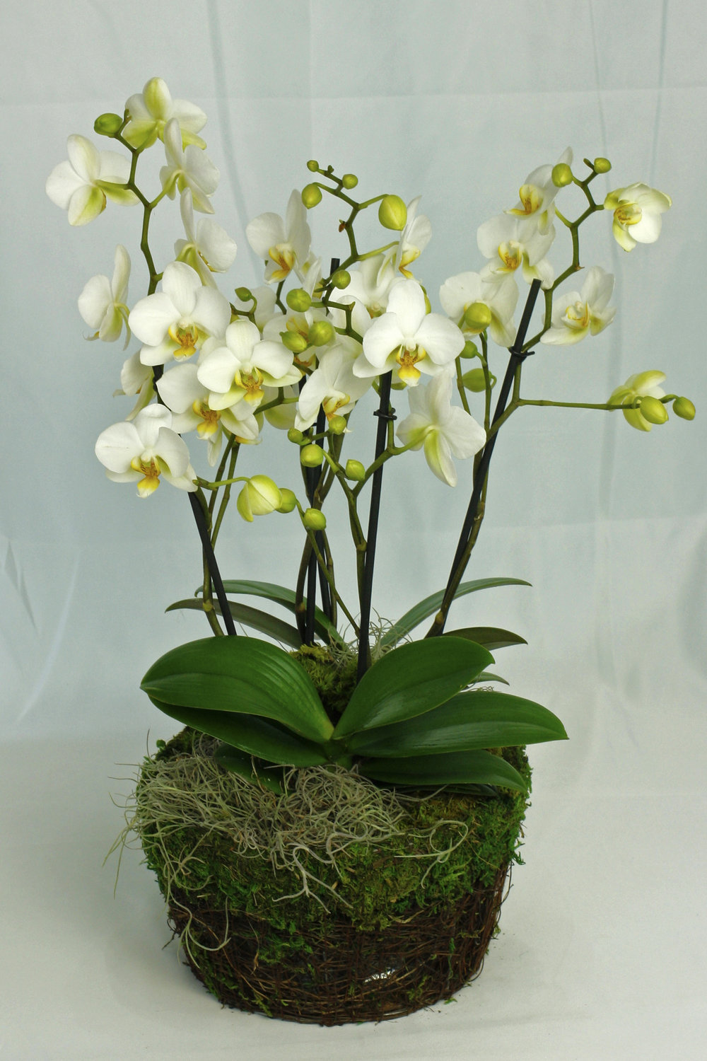 Orchid Jungle $95-$165 -