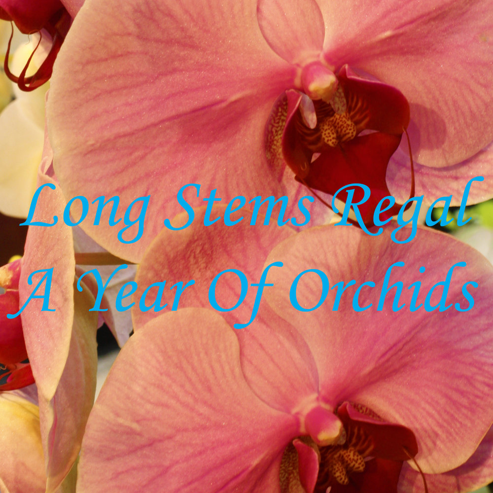 A year of Orchids $600-$1450 -
