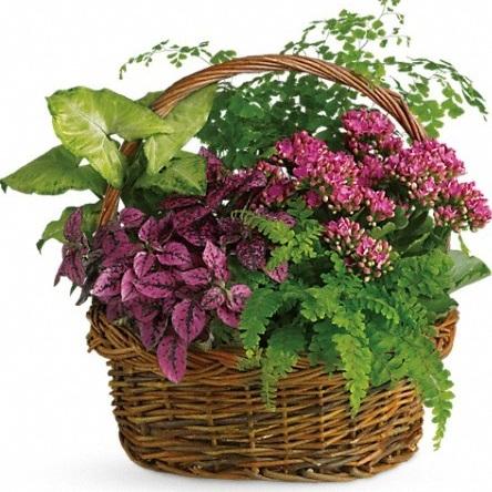 Secret Garden Basket $70-$125 -