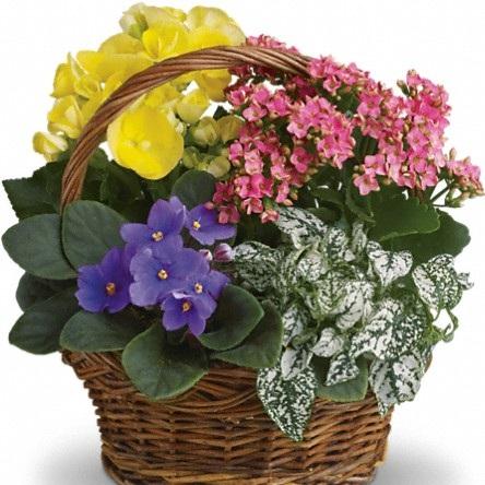 Spring Blossoms $60 -