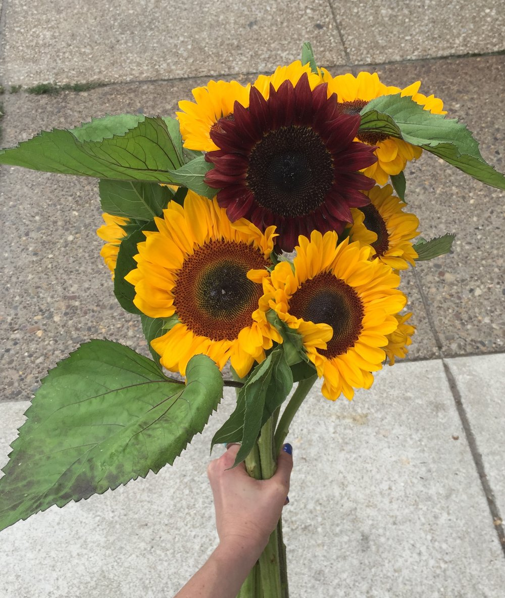 Unique burgundy sunflower!