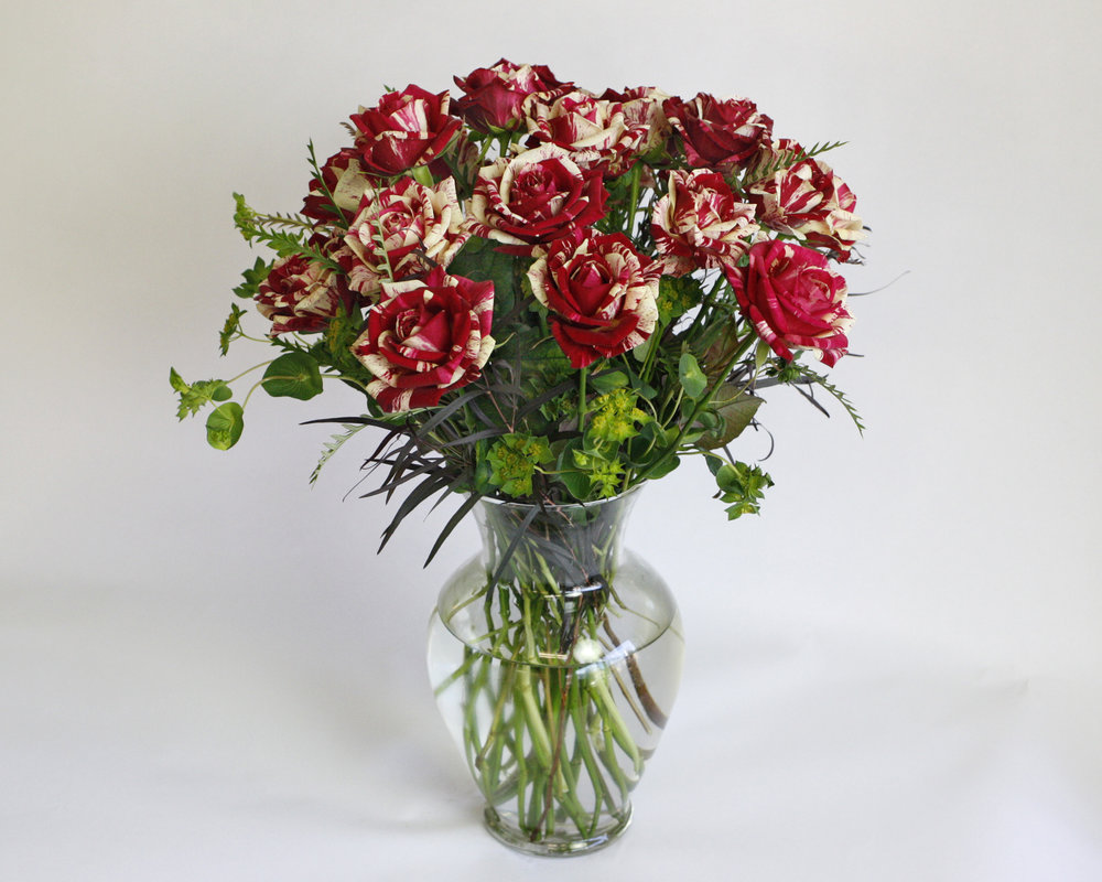 Harlequin Rose - this roses stunning splattered look of red and white make it one of the most popular for Valentine's Day
