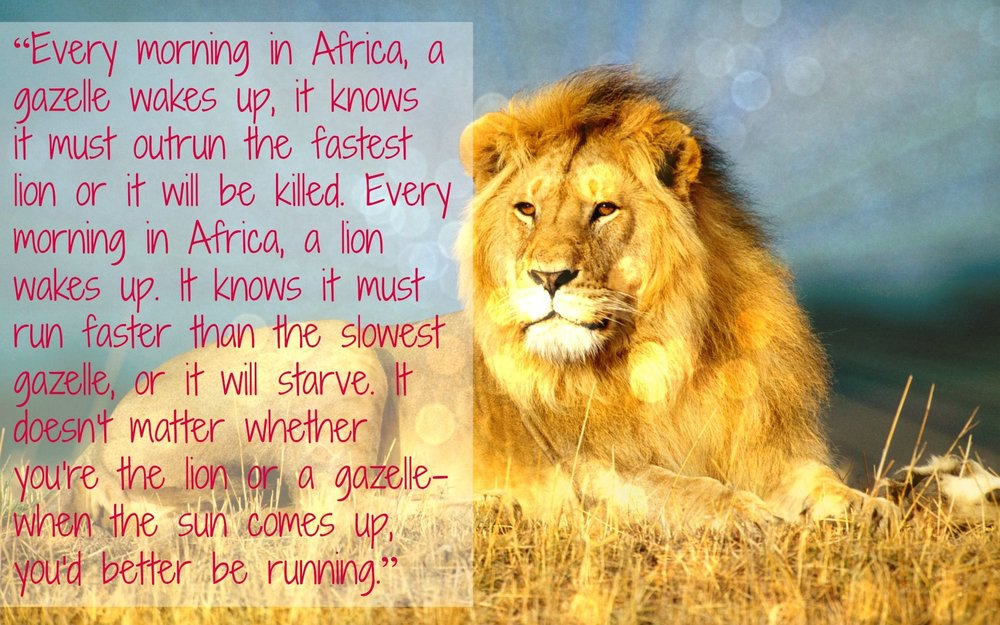 A Lions Morning.jpg