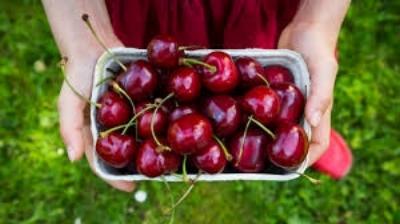 cherry1.jpeg