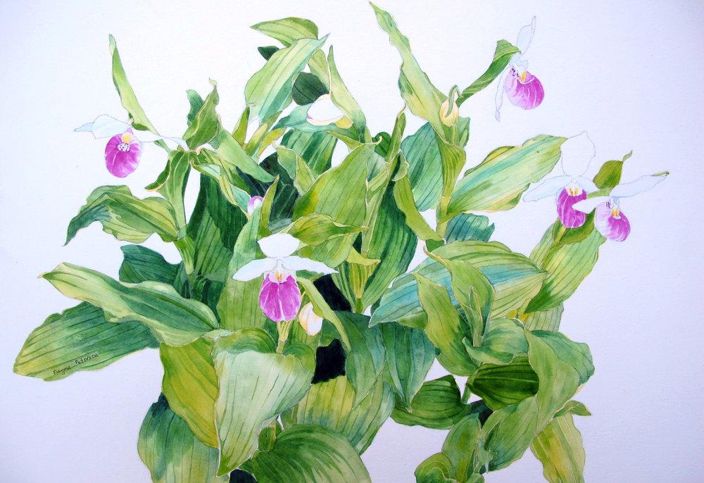 Introduction to botanic art