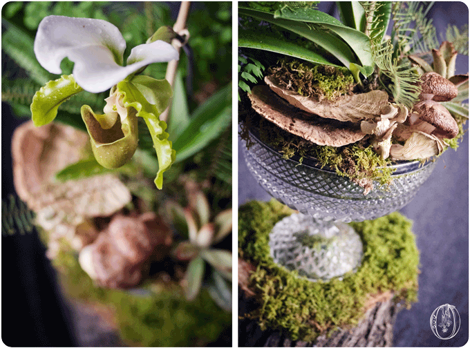 Holly-Hedge-Estate-Woodland-Lady Slipper-Orchid-Mushroom-Succulent-Moss-Terrarium-Centerpiece-Oleander-New-Jersey-Bucks-County-PA-Wedding-Florist