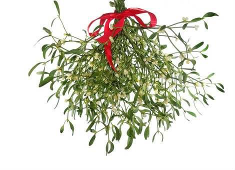 Article: Mistletoe, Kissing - Mistletoe is a plant that grows on willow, oak, and apple trees. The tradition of hanging it in the house goes back to the times of the ancient Druids...