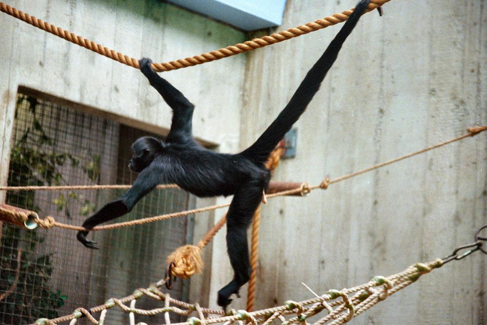 monkey toe.jpg