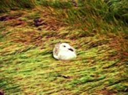 gull_grass.jpg