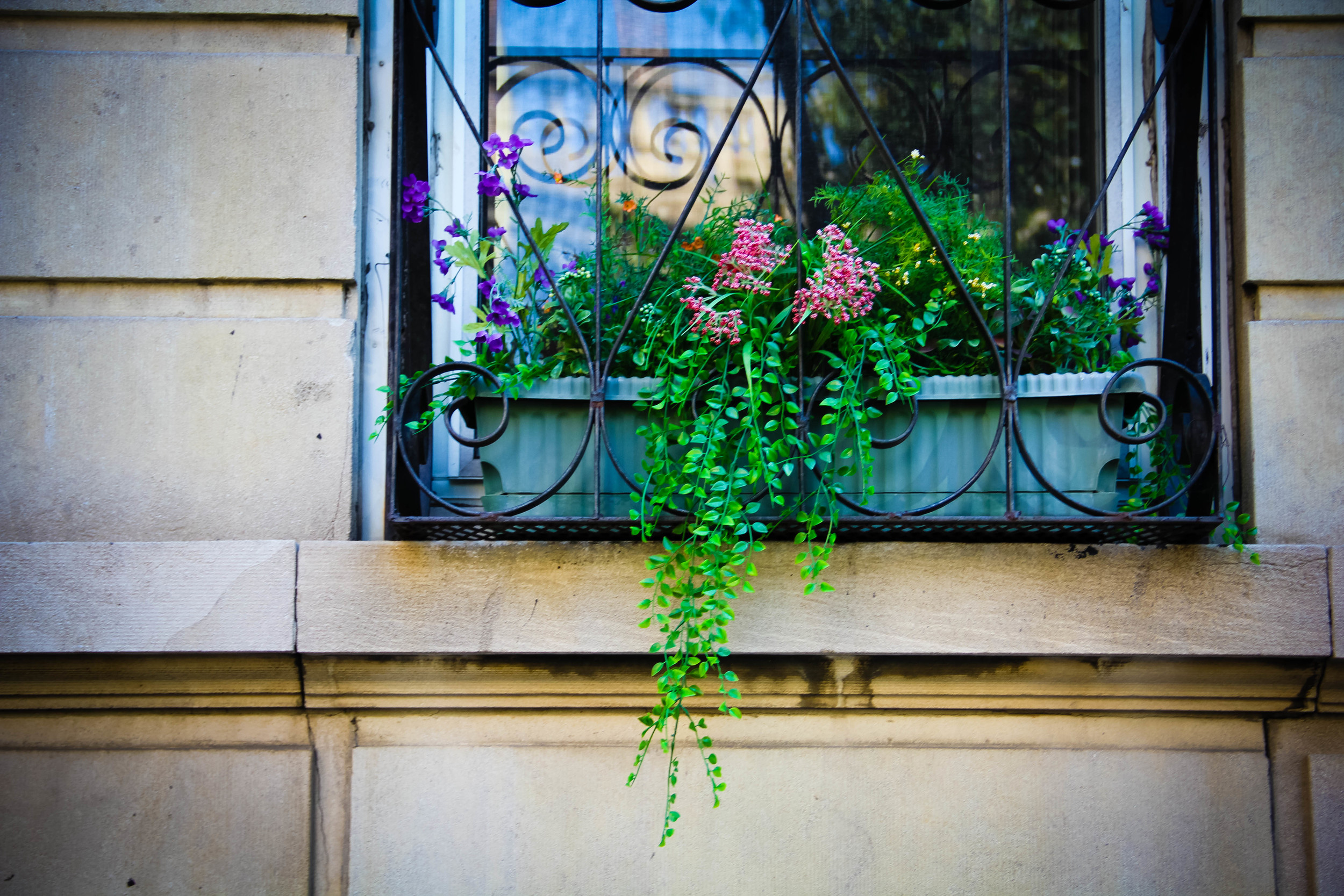 window box2 (1 of 1)