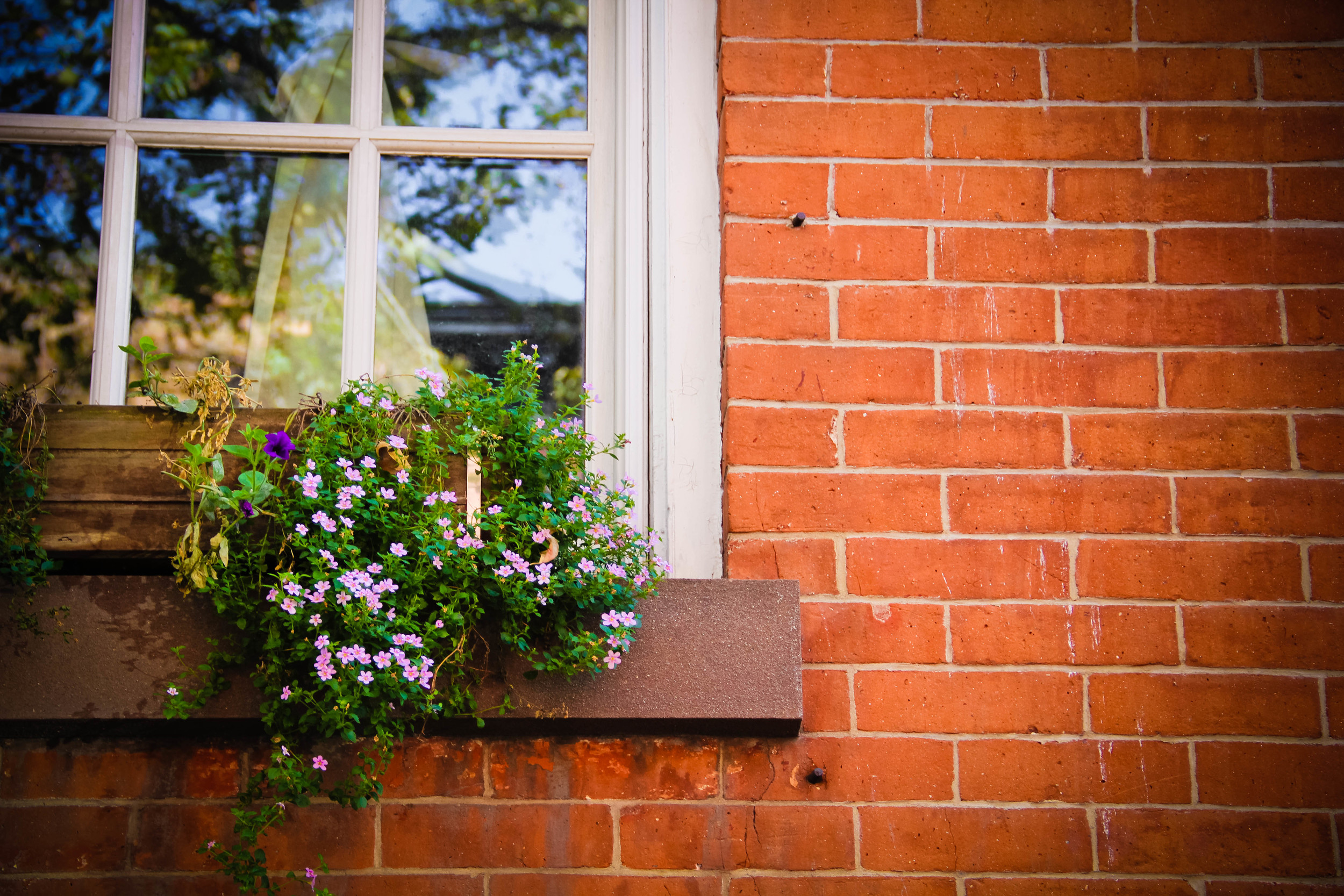 window box3 (1 of 1)