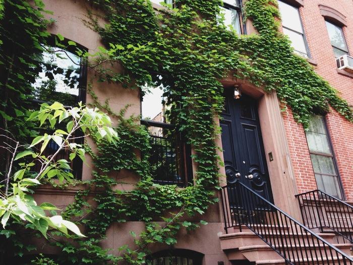 green ivy2