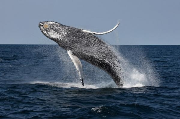 Photo from  whalewatch.com