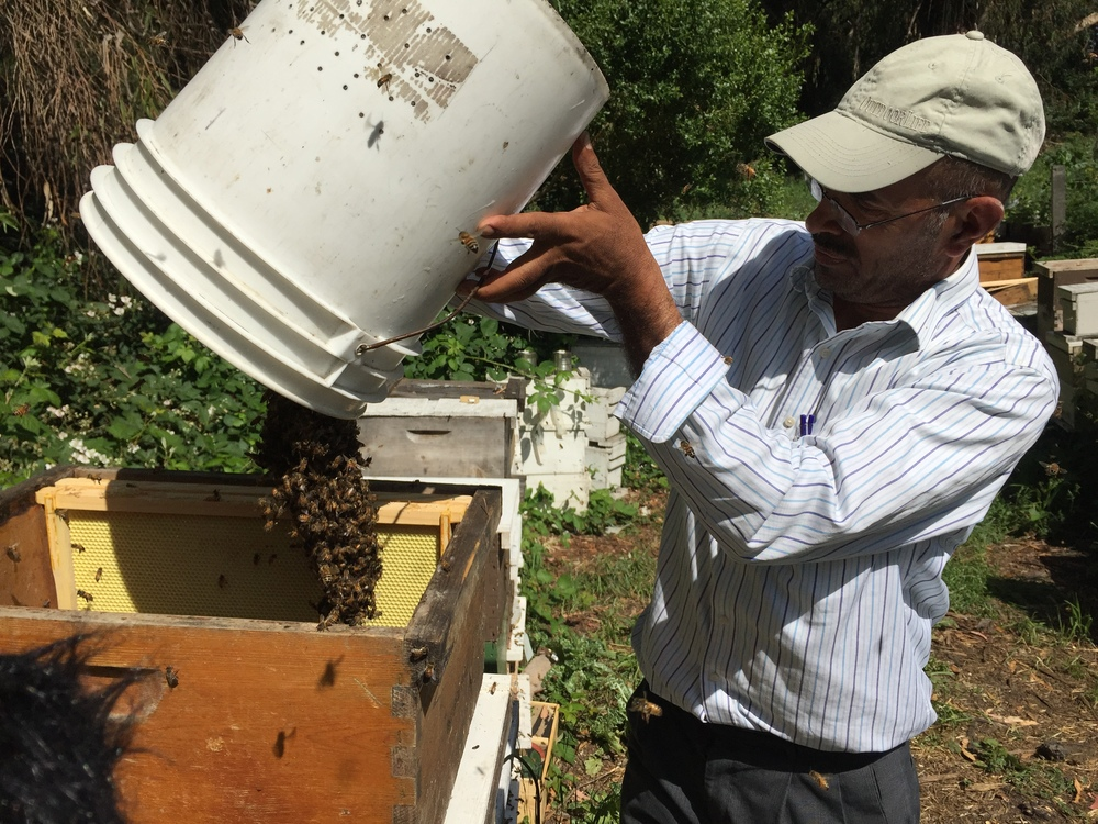 Khaled Almaghafi at his apiary in Richmond, California, just north of Oakland.  Photo: Ali Budner