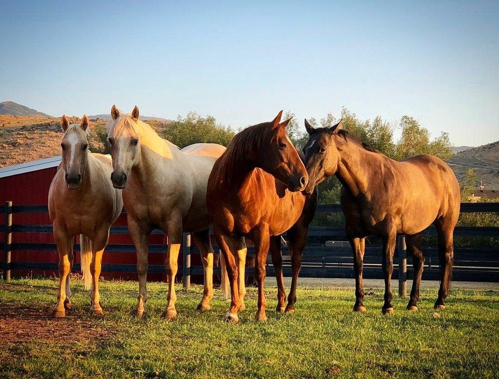 Gracies horses .jpg