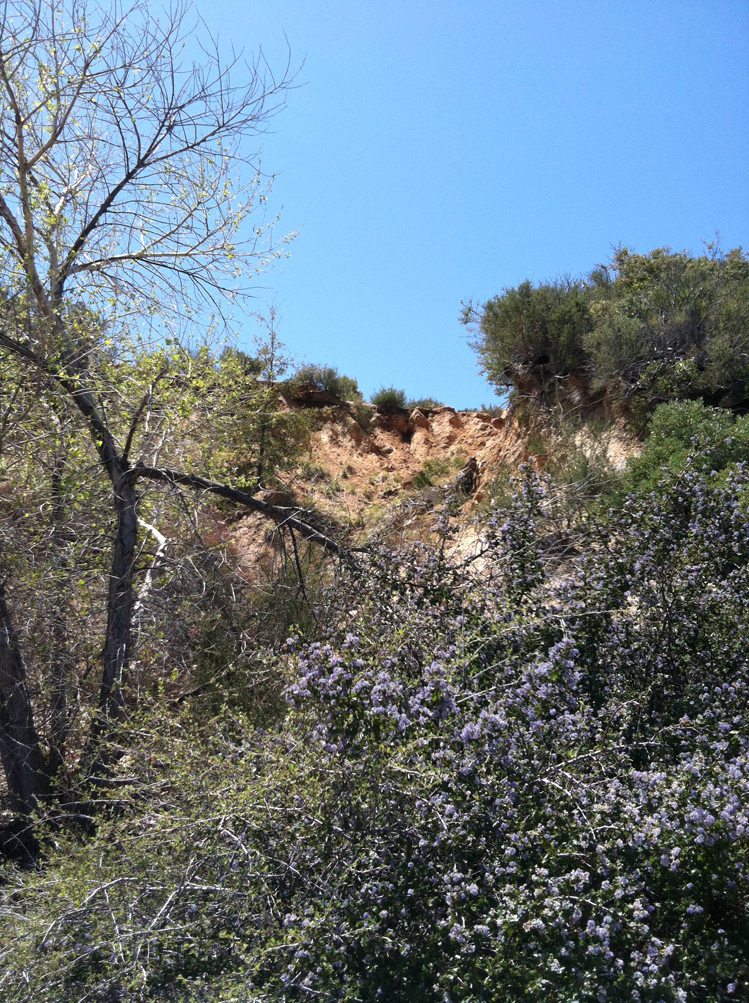 A look up the bluff toward the original glory hole, and the thick bushes which were heavily bee infested. Click to enlarge. (Photo: Jason Stephenson)