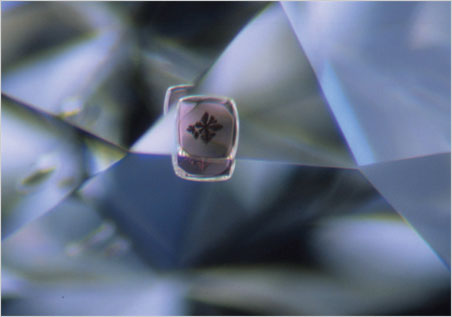 Graphite dendrite on pyrope that developed through graphitization at the garnet-diamond interface (1.8-mm horizontal field of view). (Photomicrograph: John Koivula)