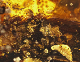 DINOSAUR-ERA Bird wings in amber READ MORE »