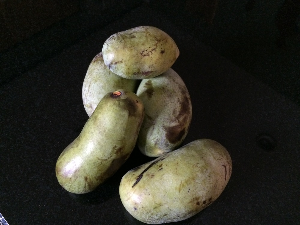A pile of pawpaws, looking all artsy against my black granite counter