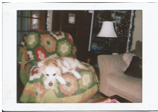 The last picture I took of him.  Two years ago, on a polaroid.