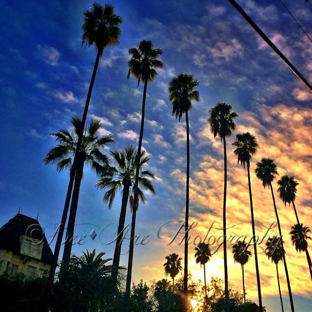Sunset Palm Trees.jpg