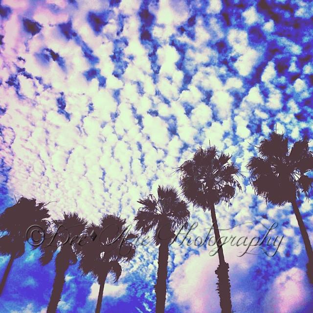 Palm Tree Line.jpg