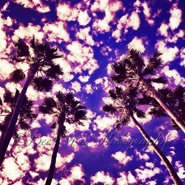 Purple Palms and clouds.jpg