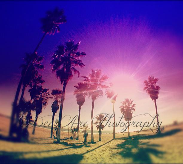 Colorful Venice Palm trees fisheye.jpg
