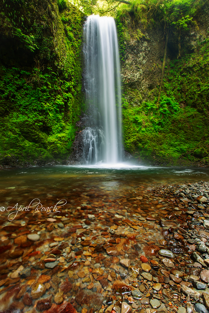 Weisendanger Falls, Columbia River Gorge, Oregon