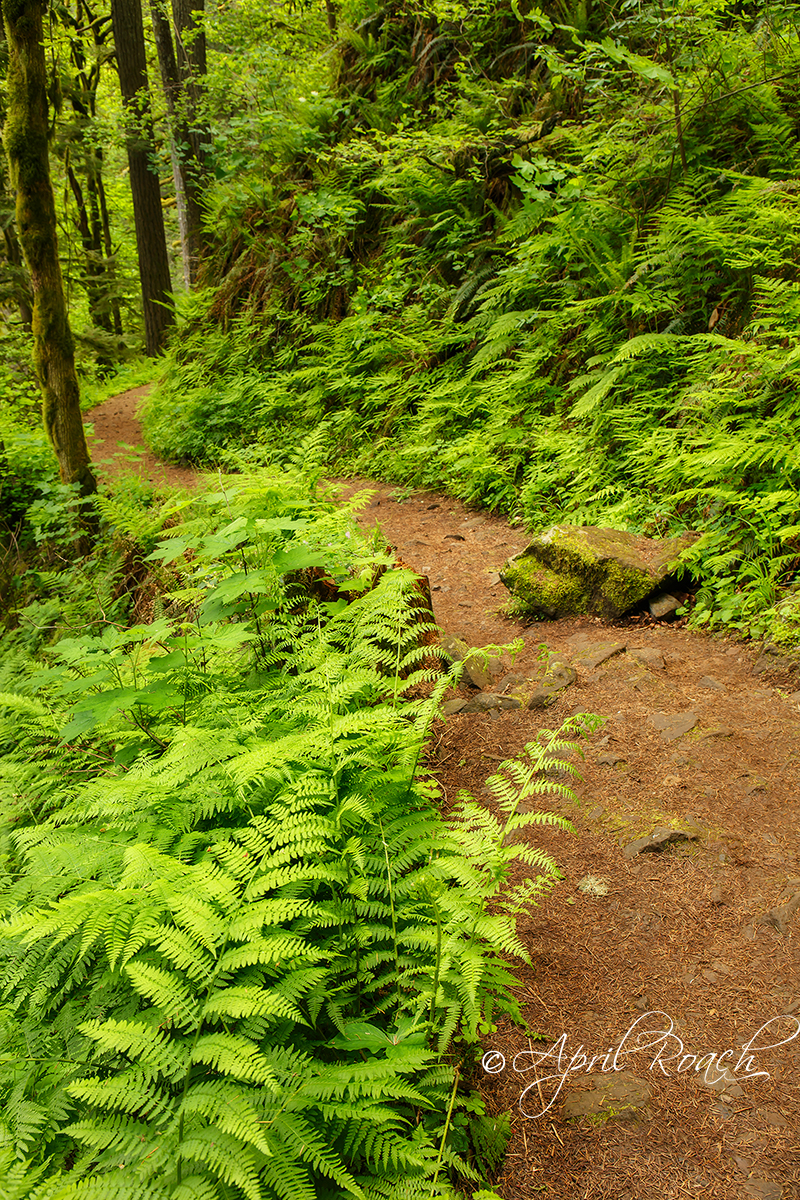 Path along the Columbia River Gorge, Oregon