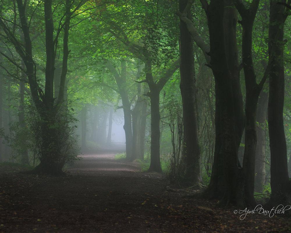 Foggy Forest Stroud.jpg
