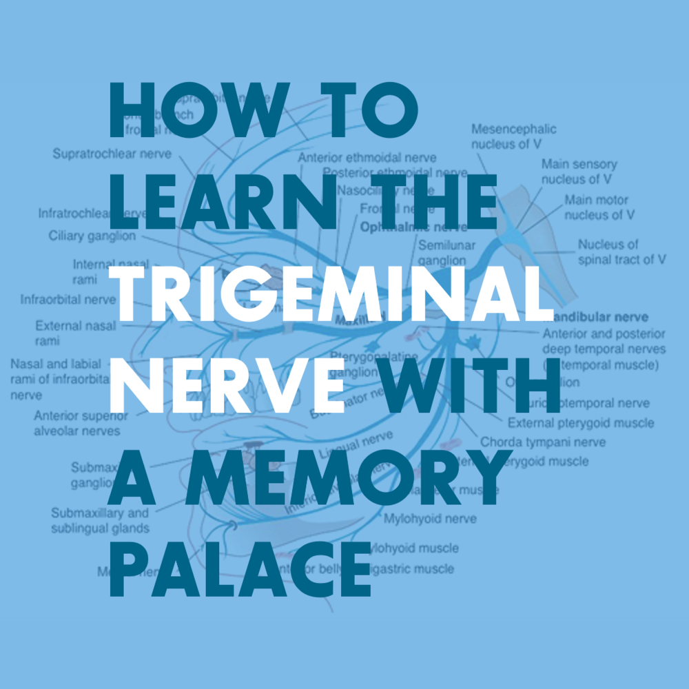 Anatomy Memory Techniques And Memory Palaces For Students