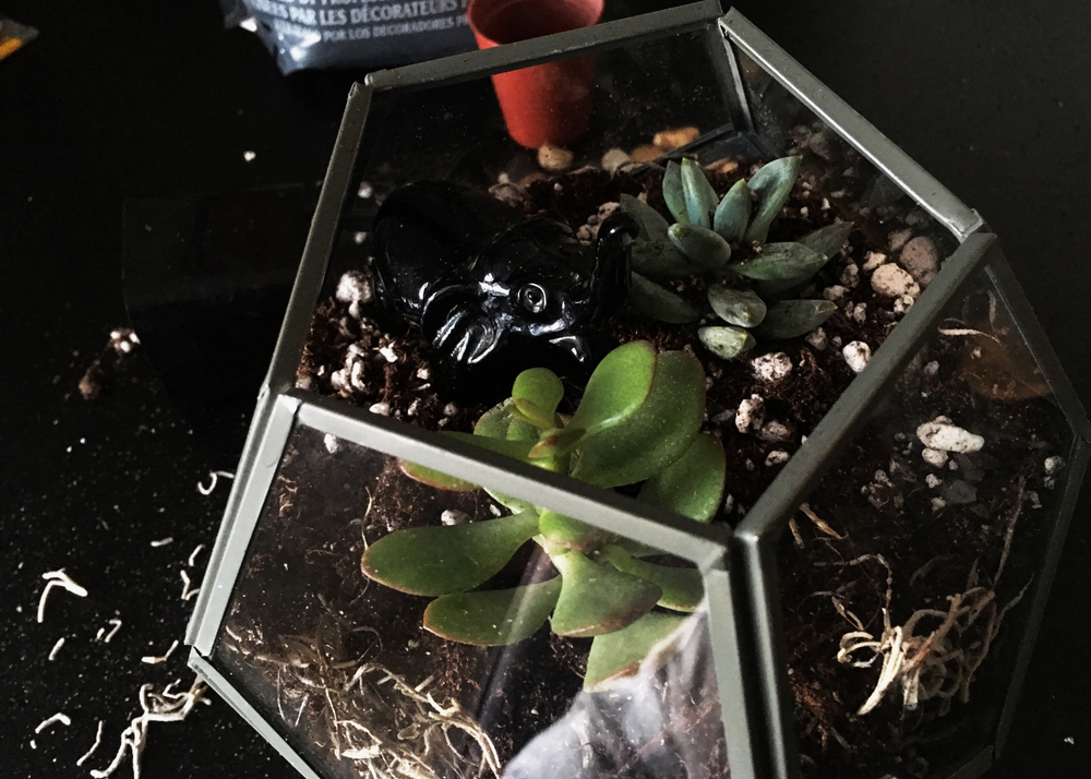 sam-c-perry-how-to-make-your-own-terrarium-zoom-side.jpg