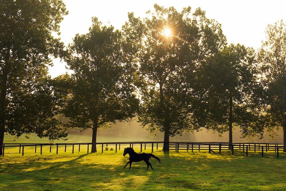 Horse Country 1200-5.jpg