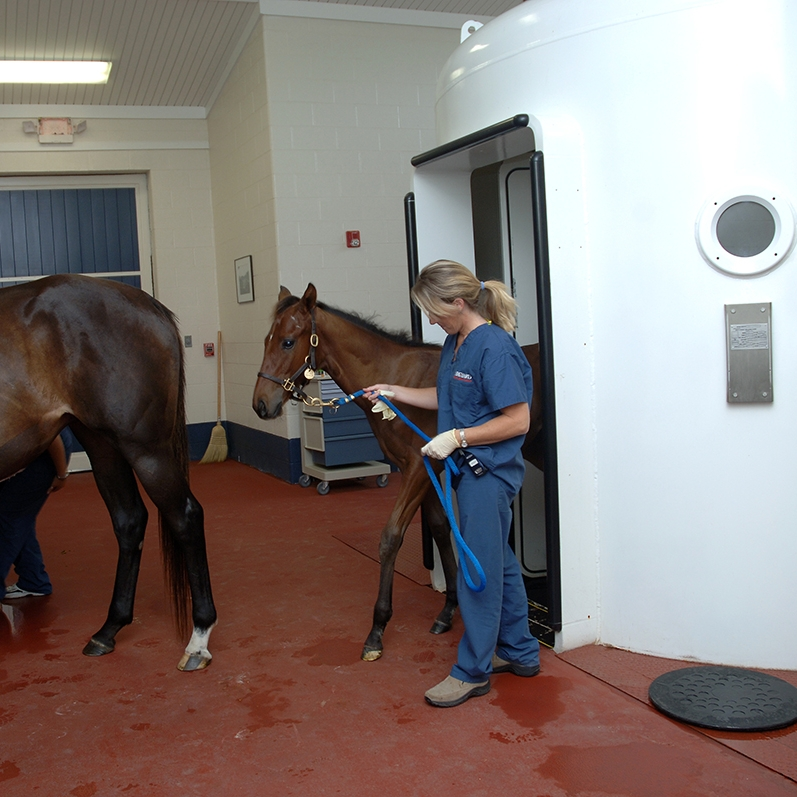 Hagyard Equine Medical Institue Lexington, Fayette County March 4, 2:00 pm (wait listed)