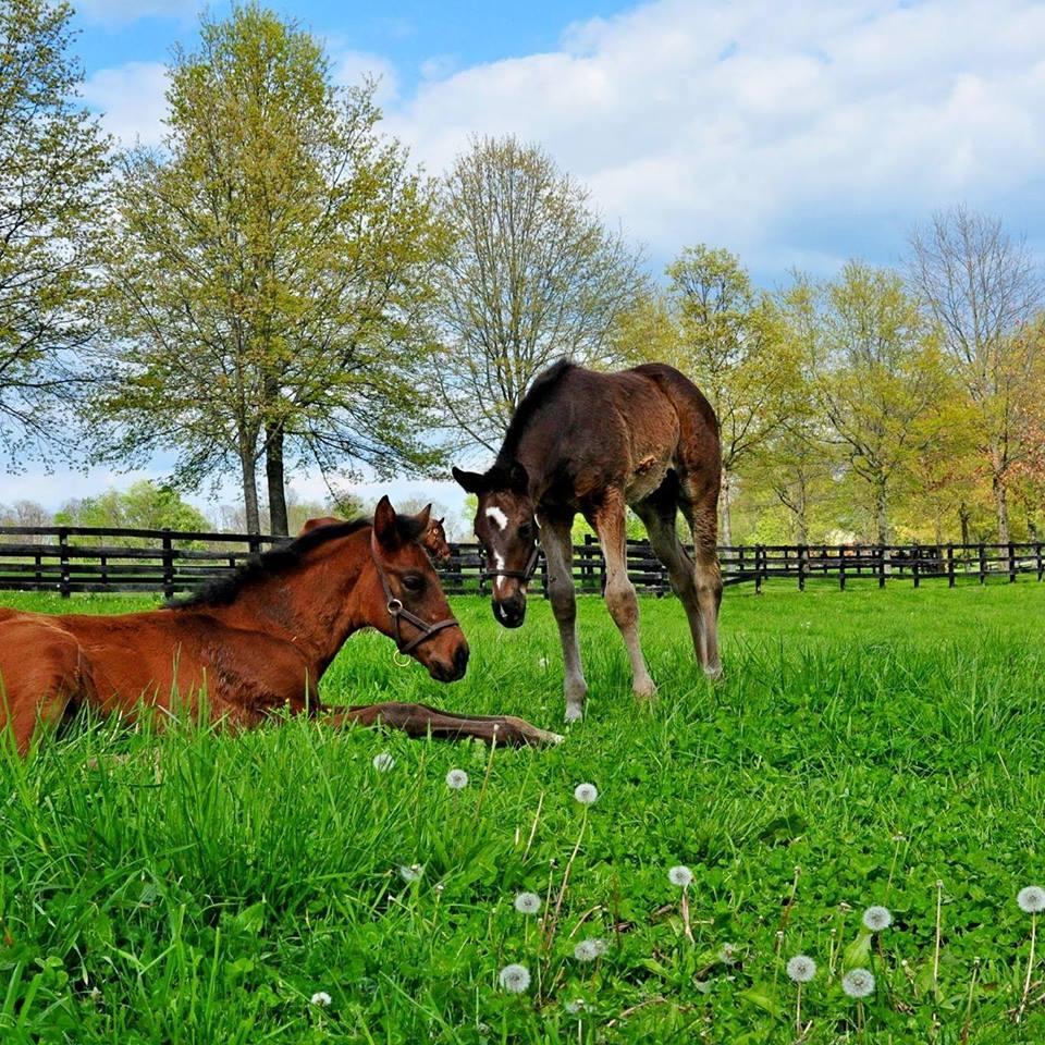 Saxony Farm Lexington, Fayette County March 3, 10:30 am (wait listed)