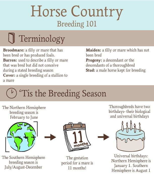 breeding-infographic.jpg