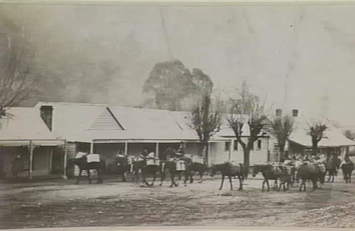 A packhorse train leaving Wraith's Store, Harrietville in the early 20th century.