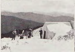 Razorback Hut. Photo Roy Weston, circa   1931.