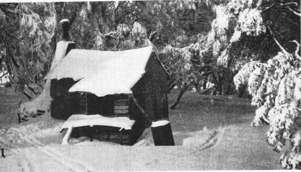 Cow Camp Hut stood on the site of the Kooroora Hotel from 1930 to 1951.  J.S . Wilkinson