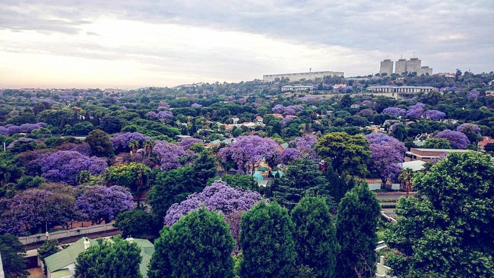 moving to Johannesburg, expat in Joburg