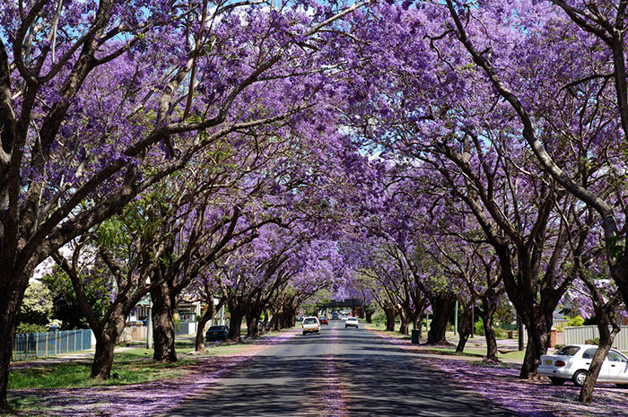 Monroe Drive, Houghton - Taking a drive long this road during Spring is exquisite! Definitely a must!