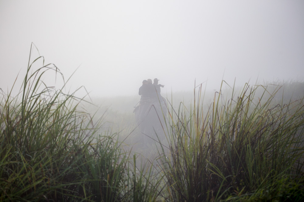 Searching for tigers in the Kaziranga National Park, Assam
