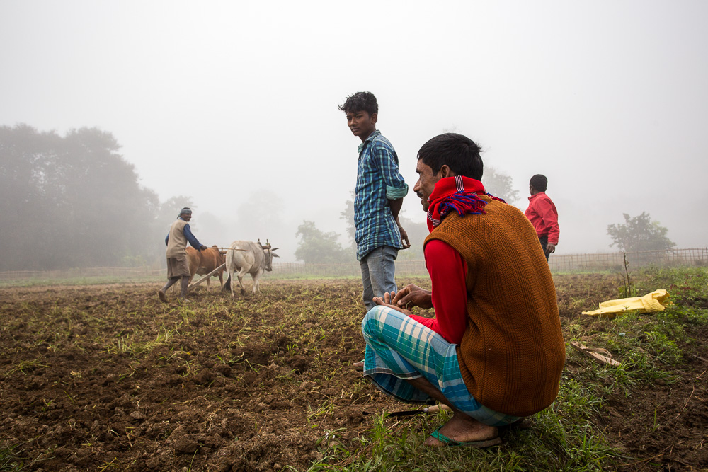 Early morning ploughing, near Kaziranga, Assam